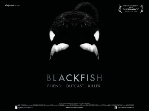 blackfish_web